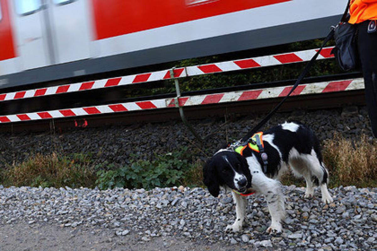 Дороги в Германии начнут строить при помощи собак